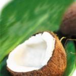 Bericht uit de oude doos – Kokosolie