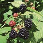 Biologisch fruit, custard en invriezen