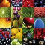 Vrije Radicalen en Anti-Oxidanten