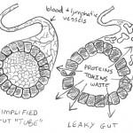 Lekkende Darm Syndroom – wat is dat?