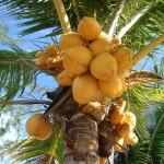 Kokosolie – Budgetvriendelijk!