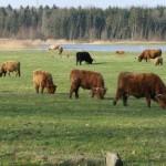 Hooglandervlees – Oproep en Ervaringen