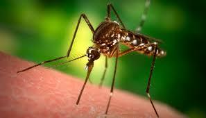 Manieren om Steekmuggen tegen te gaan