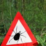 Gastblog Danielle van Huis: Ziekte van Lyme