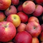 Bespaar op je Boodschappen Dag #4: Appels in de Keuken – Gastblog