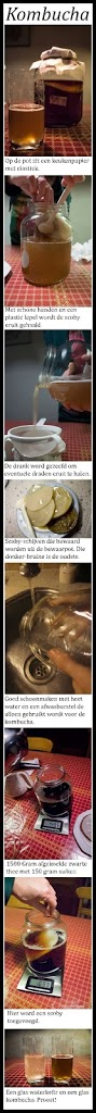 Hoe maak je Kombucha