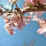 Quinoa Voorjaarssalade
