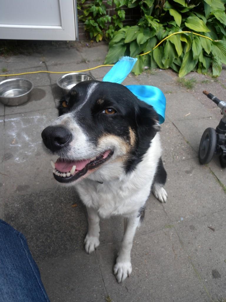 Graanvrij hondenvoer Saar