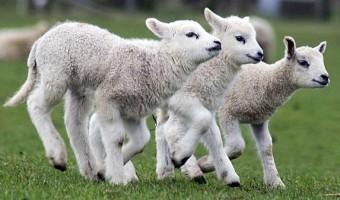 Lammetjes Meivakantie