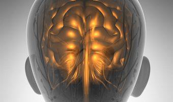 Nieuw onderzoek: overgewicht veroudert je hersenen