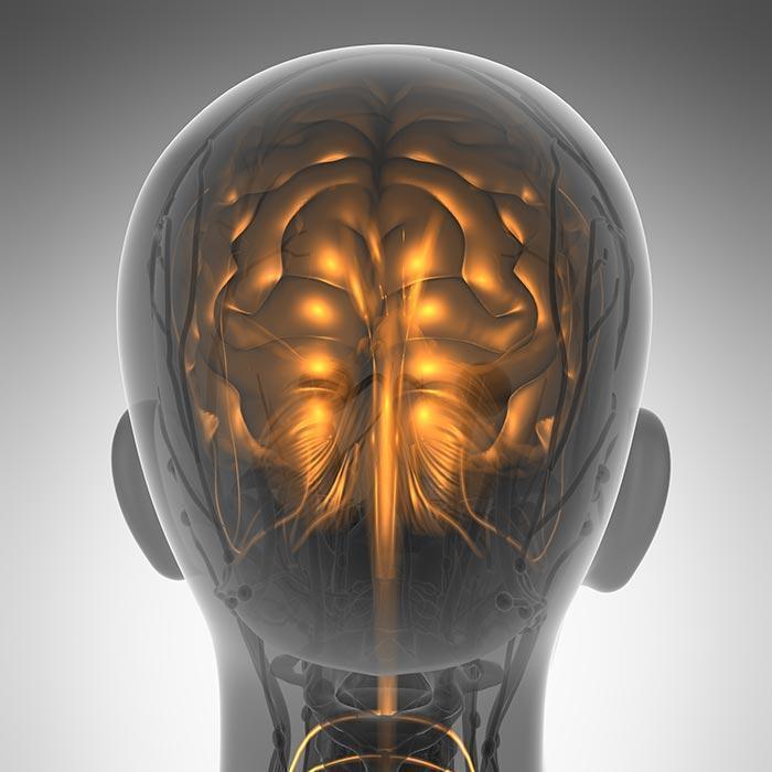 overgewicht negatief effect op hersenen
