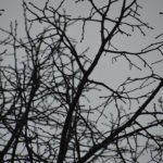 Wat is Voorjaarsmoeheid en wat kun je er aan doen?