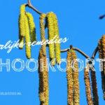 7 Natuurlijke Remedies bij Hooikoorts
