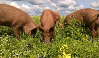 grasgevoerd vlees