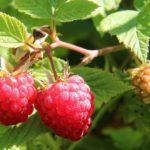 Natuurlijke Remedies bij PMS & Krampen