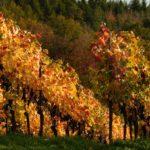 De Diversiteit van Italiaanse Wijnen