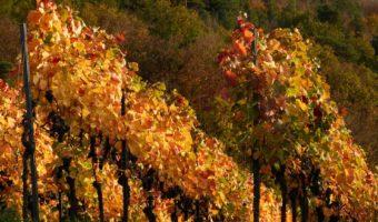 diversiteit van italiaanse wijnen