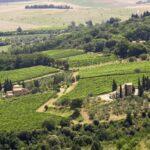 Brunello Wijn: De moeite van het wachten waard